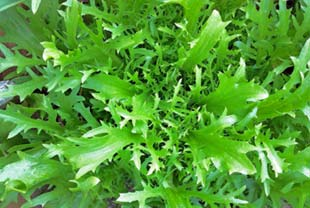 Photo: green escarole