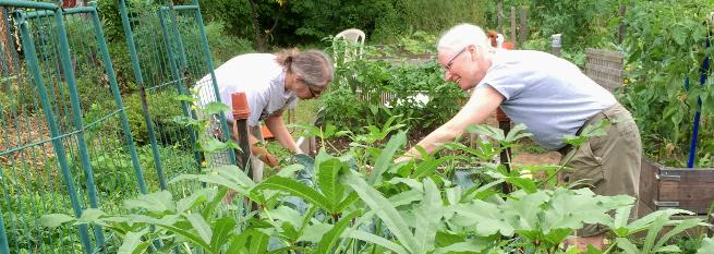 photo:two women gardening