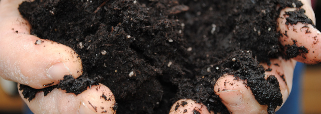 photo: hands holding soil. Image courtesy Pat Dumas via Creative Commons