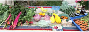 photo of table with fresh produce