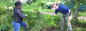 man and woman dig in garden