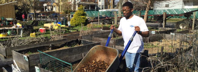 Man carrying mulch in wheelbarrow