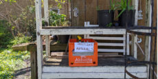 Guidelines for Community Gardening During a Pandemic