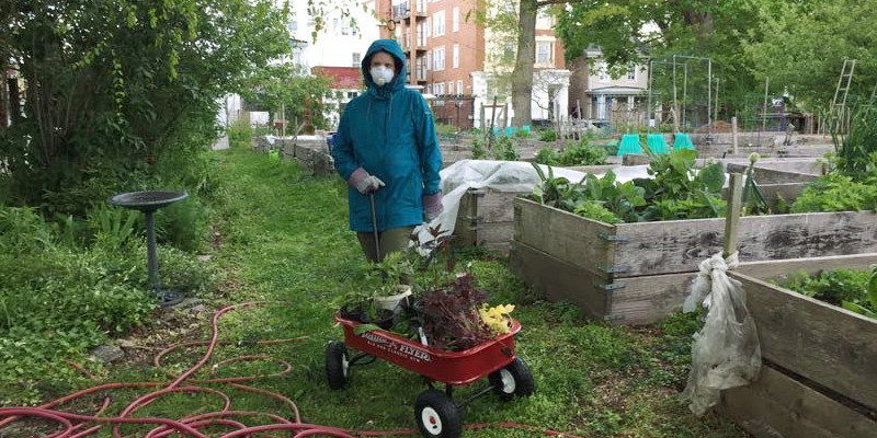 photo: woman in coat hauling plants in red wagon
